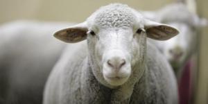 Hayvansal Ürün Üretim Değerinde Artış