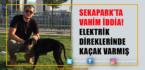 Direkteki Elektrik Kaçağı Köpeği Öldürdü İddiası