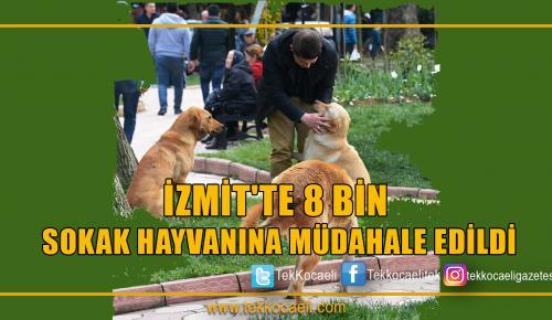 İZMİT'TE 8 BİN SOKAK HAYVANINA MÜDAHALE EDİLDİ