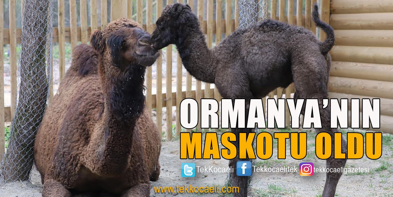 Ormanya'nın Yeni Maskotu 'SAHRA'