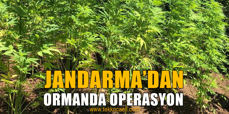 Jandarma'dan 2 Ayrı Noktaya Operasyon
