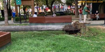 İzmit Yeni Cuma Parkında Ağaç Devrildi
