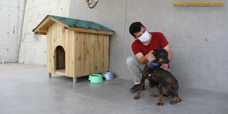 Türkiye'nin İlgi Odağı Olan Köpek, Artık Özel Barınağında