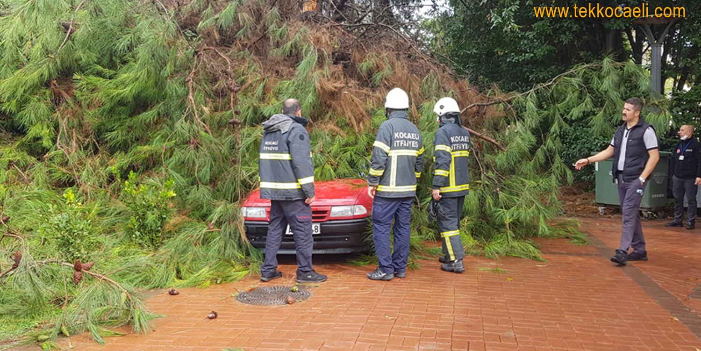 Çam Ağacı Otomobilin Üzerine Devrildi