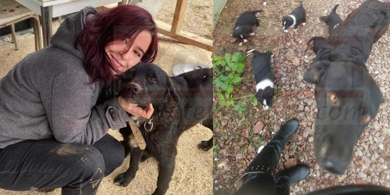 Yeni Doğum Yapan Köpeğe Saldırıp Kör Bıraktılar